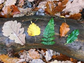leaf line up